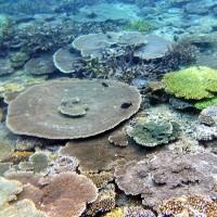 Coral Heath Checking